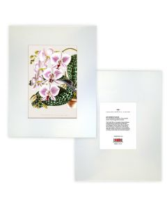 Orchids Matted Print